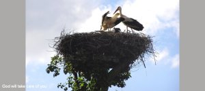 storks on stock xchng 950 425 text